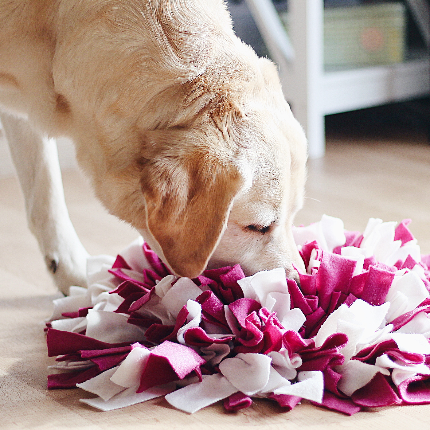 Schnüffelteppich selber machen für Hunde Hund